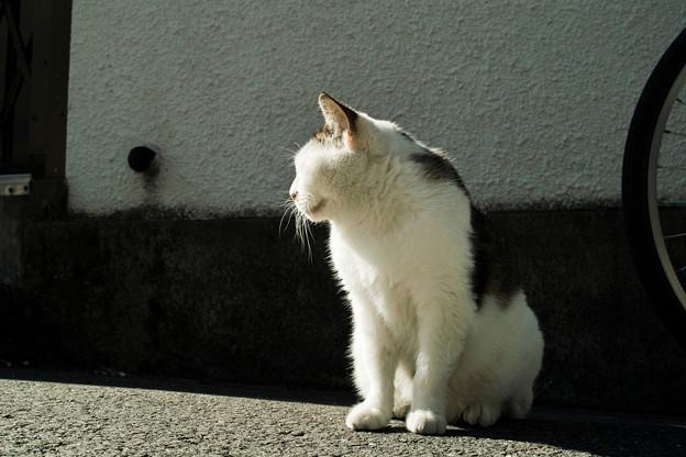 猫撮り散歩1992