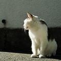 写真: 猫撮り散歩1992