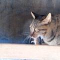 写真: 猫と鼠