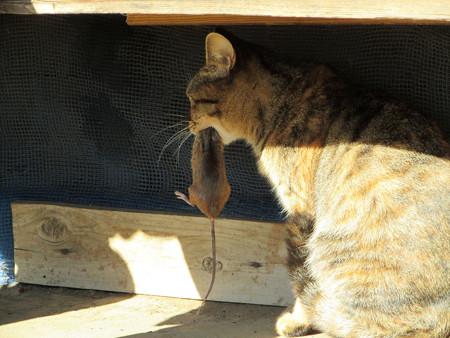 猫とネズミ の巻