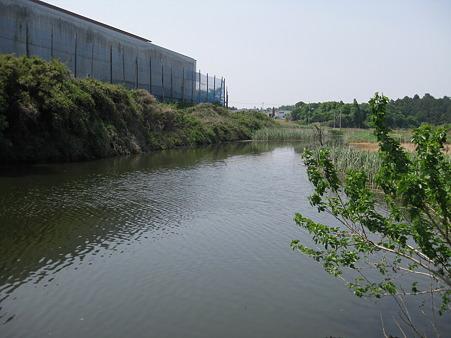 新池 (3)