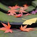 写真: 落ち葉たち