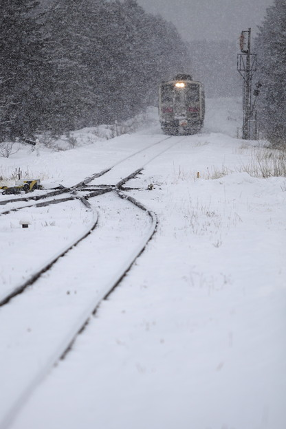 Photos: 風雪列車