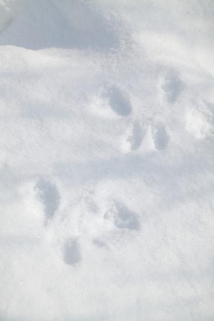 動物の足跡シリーズ(2)