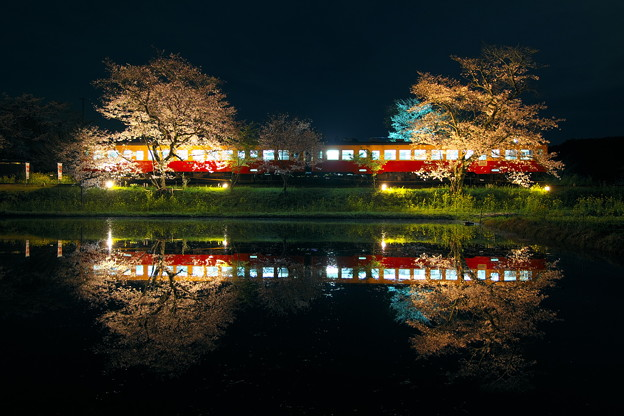 飯給夜桜2017