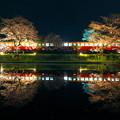 Photos: 飯給夜桜2017