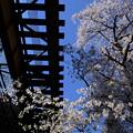 Photos: 桜と線路