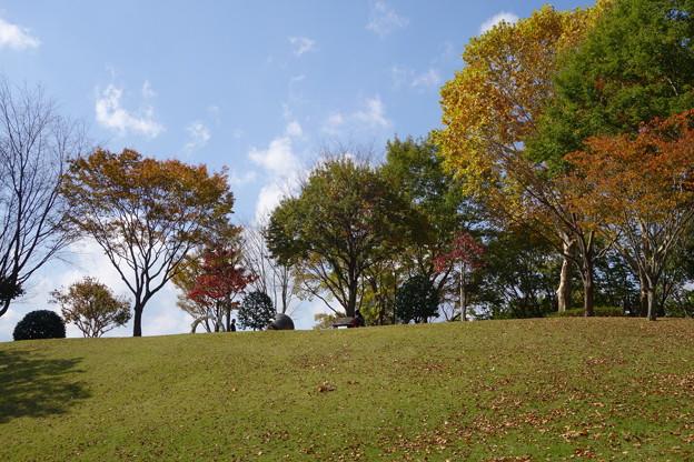 写真: 秋の公園