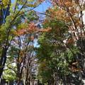 写真: 秋の諏訪坂