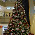 写真: Christmas tree