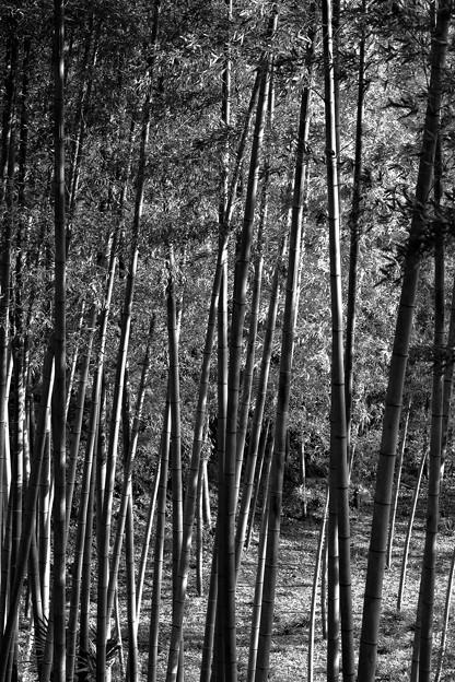 竹林モノクローム