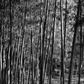 写真: 竹林モノクローム