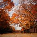 写真: 代々木公園の紅葉