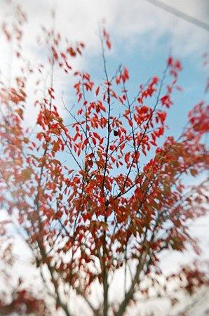 トイカメラde紅葉2009/11/12-11650003