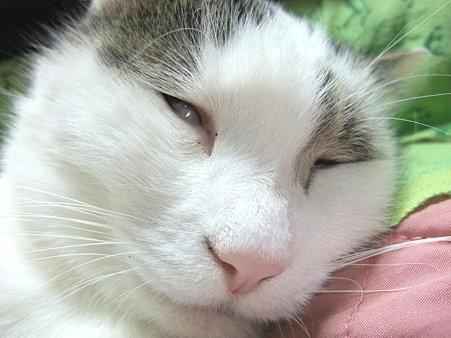 白目剥いて寝た...