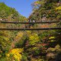 樅木も吊橋