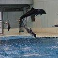 Photos: 20110504_125824