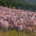 惜春の色彩