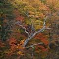 写真: 極 秋
