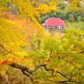 写真: 小さな小さな秋