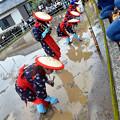 写真: 宮中献穀お田植え祭