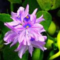 写真: 雨に咲く花