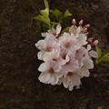 写真: 花は咲き場所を選ばない