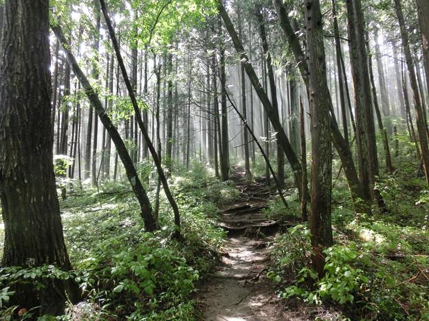 奥多摩から大岳山への登山道