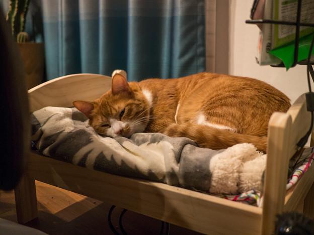 専用ベッド