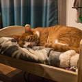 写真: 専用ベッド