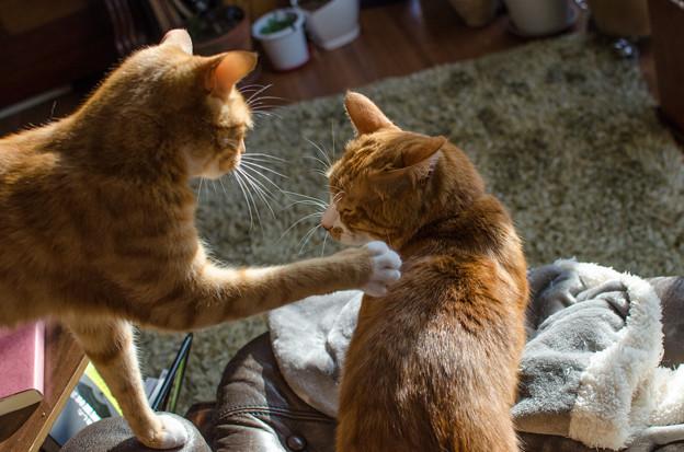 あんちゃんが、あの仔猫をちゃんとしつけないから、、