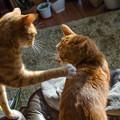 写真: あんちゃんが、あの仔猫をちゃんとしつけないから、、