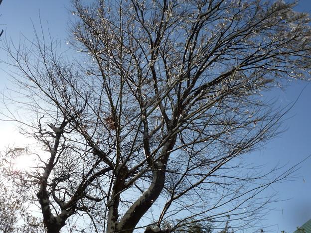 雪原の枯れ木