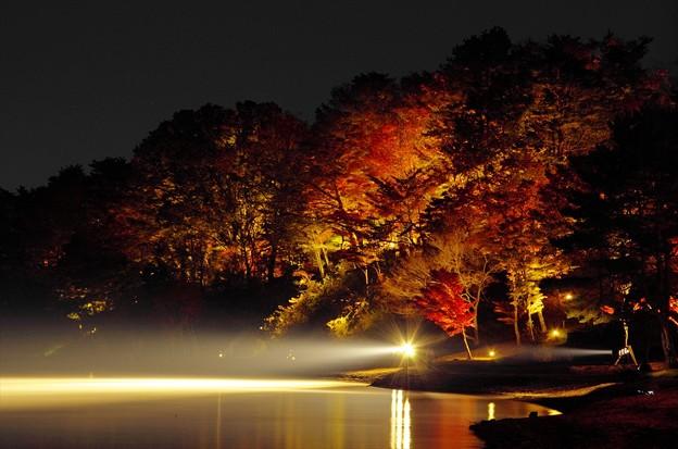 2014富士山麓の秋144「山中湖紅葉ライトアップ」