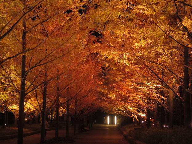 写真: 森林植物園