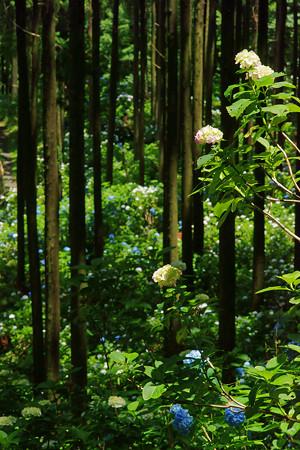 森の中で咲く