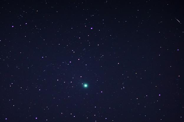 ラブジョイ彗星 (C/2014 Q2 (Lovejoy))