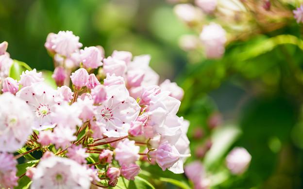 淡いピンク色