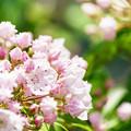 写真: 淡いピンク色