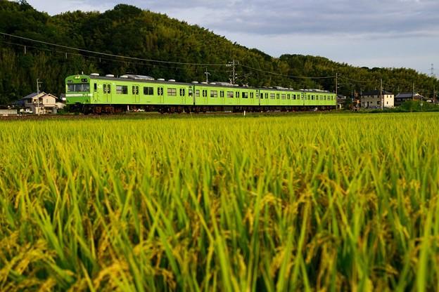 里は今、実りの秋。(奈良線:京都府)