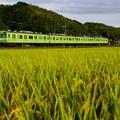 写真: 里は今、実りの秋。(奈良線:京都府)