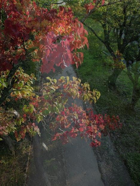 色づく小道