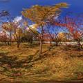 秋景 駿府城公園 360度パノラマ写真 HDR