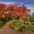 駿府城公園 紅葉山庭園の紅葉 360度パノラマ写真(5)