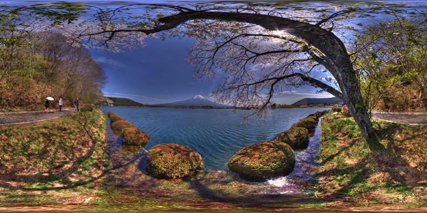 田貫湖 桜 360度パノラマ写真(2)