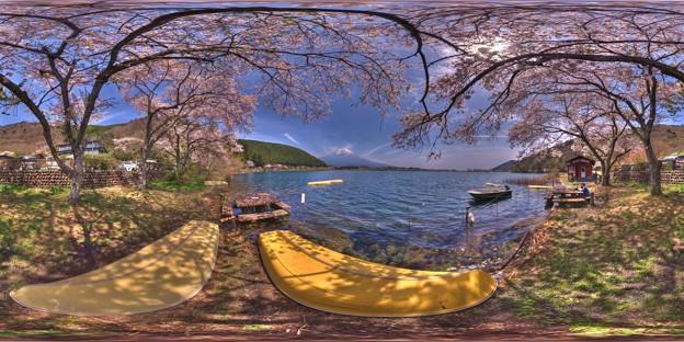 田貫湖 桜 360度パノラマ写真(3)
