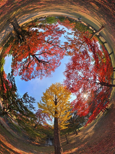 奈良公園 紅葉〈4〉 魚眼風