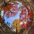 Photos: 奈良公園 紅葉〈4〉 魚眼風