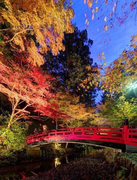 Photos: 森町 小国神社 紅葉 赤橋付近 ライトアップ (4)