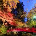 写真: 森町 小国神社 紅葉 赤橋付近 ライトアップ (4) Panorama